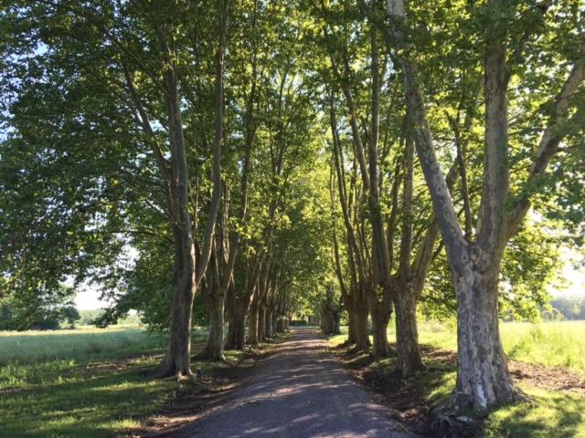 Entrada a la Quinta de Tomás Jofré