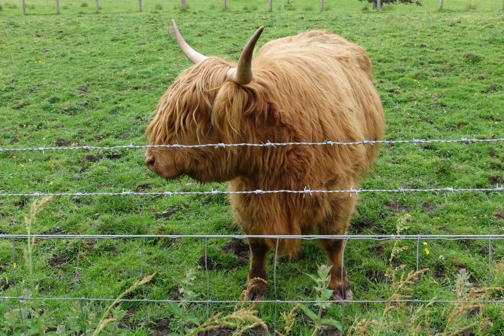 Tour a Highlands y al Lago Ness desde Edimburgo