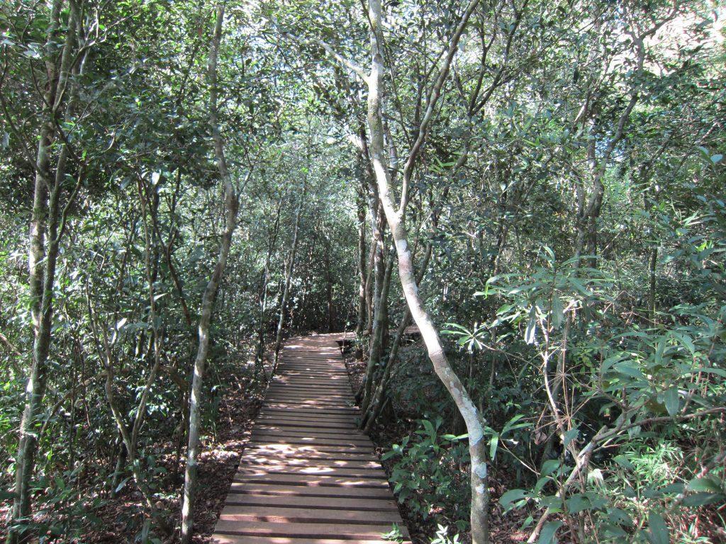 Sendero Macuco en el Parque Nacional Iguazú, lado argentino